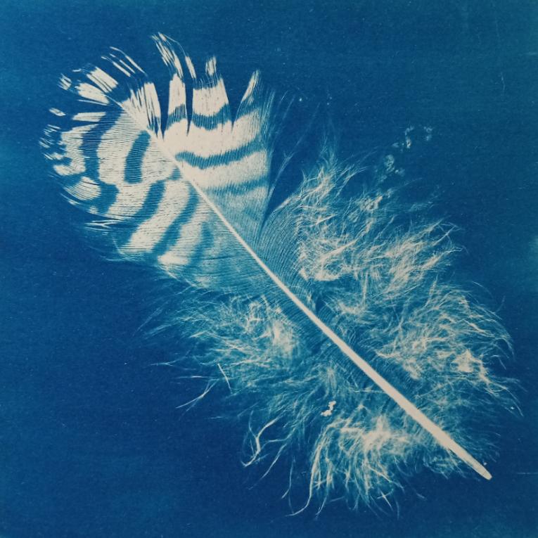 Greetings card - original cyanotype