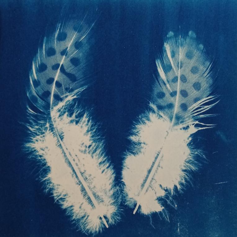 Greetings card, original cyanotype