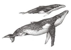 Anna Ventura, whales, arrival