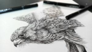 Kestrel, Anna Ventura, original ink